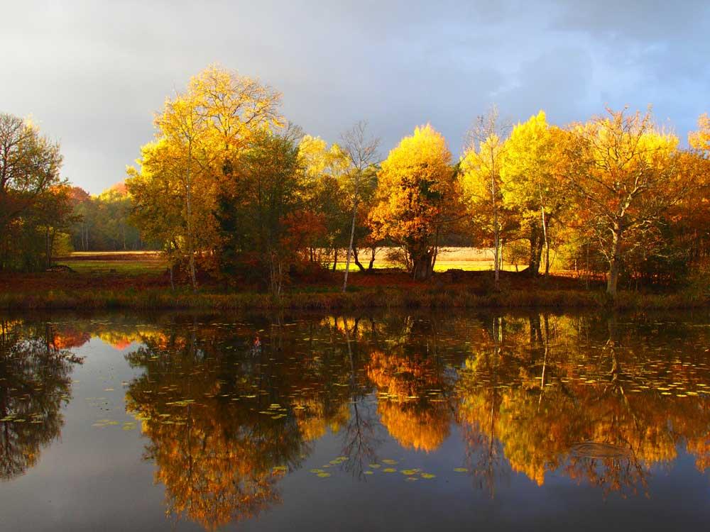 Sologne étang automne